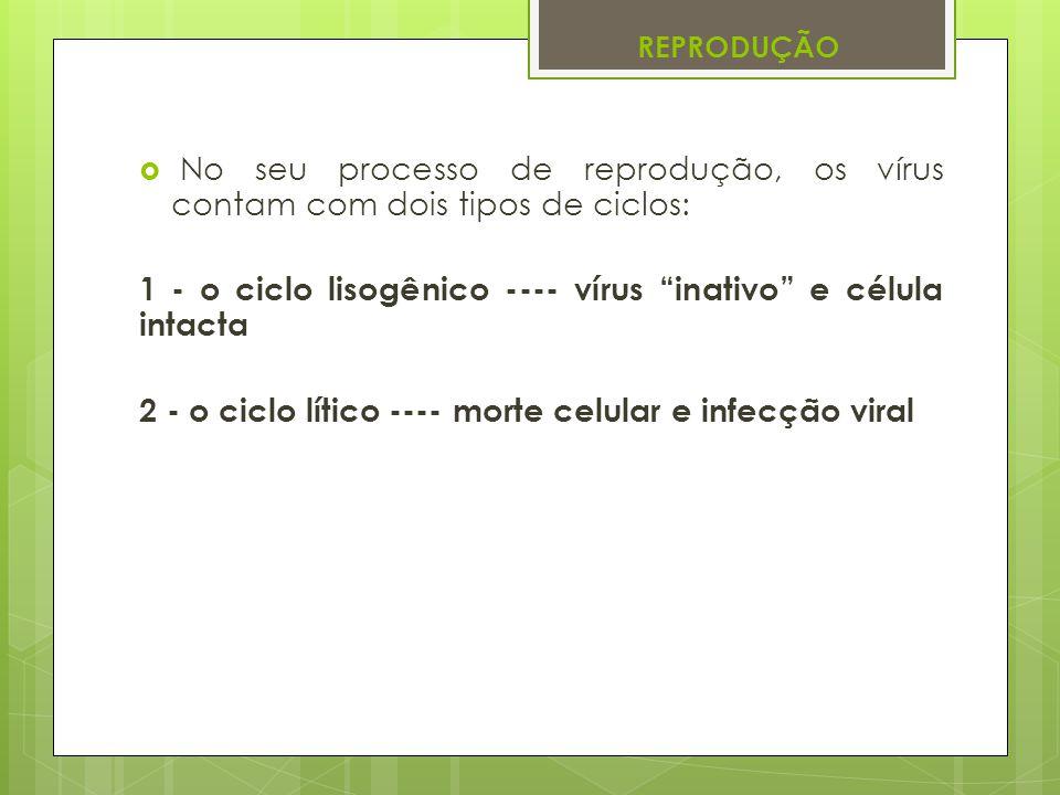REPRODUÇÃO No seu processo de reprodução, os vírus contam com dois tipos de ciclos: 1 - o ciclo lisogênico ---- vírus inativo e célula intacta 2 - o c