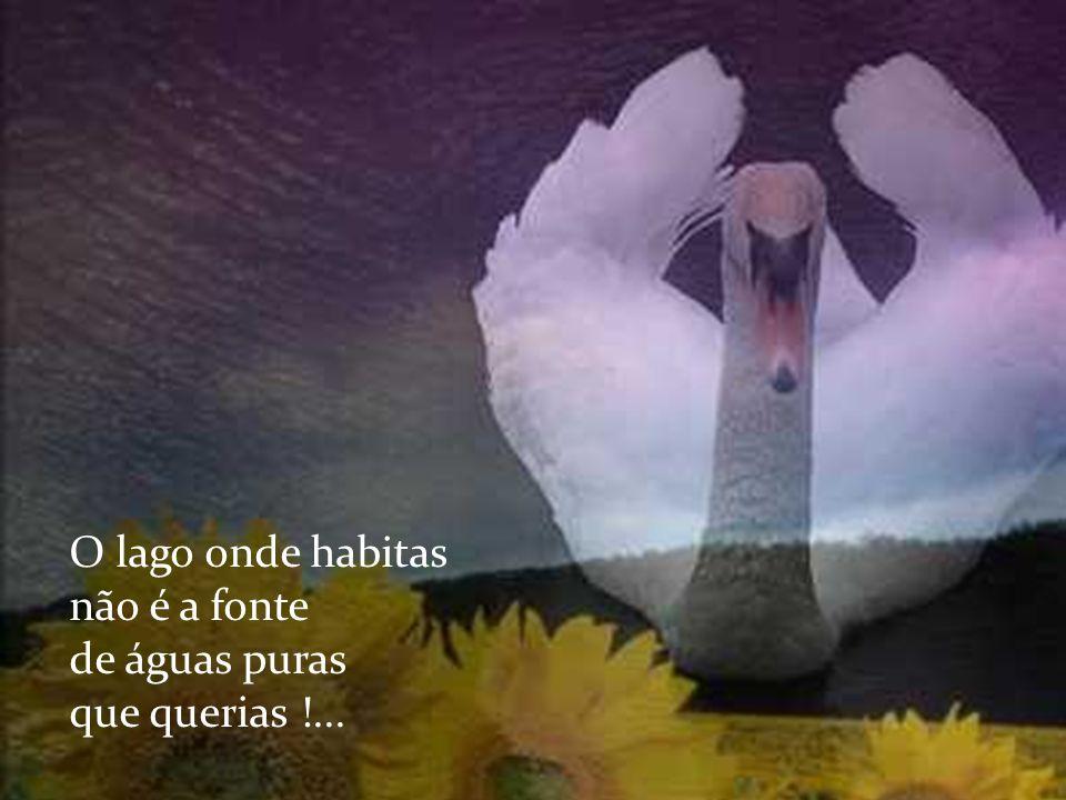 Cisne branco que deslizas pela vida serenamente !...