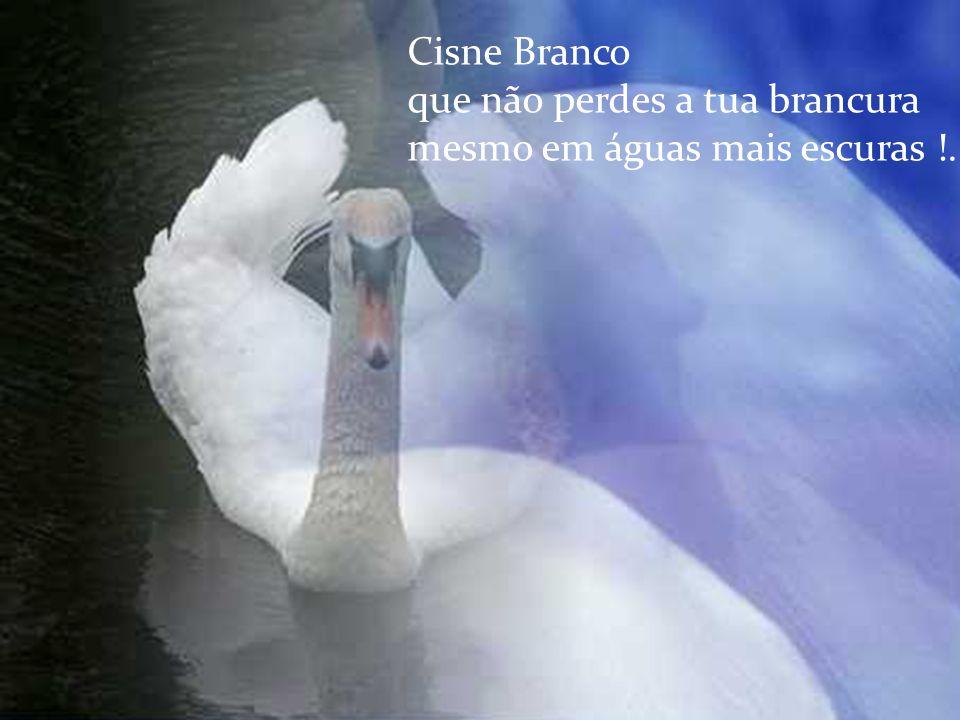 Cisne Branco que tens penas orvalhadas de dor !...