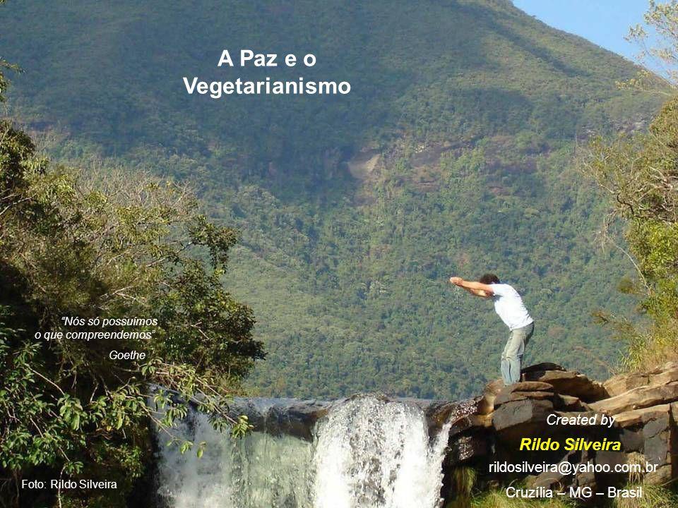 Foto: Rildo Silveira A Paz e o Vegetarianismo Rildo Silveira Created by rildosilveira@yahoo.com.br Cruzília – MG – Brasil Nós só possuímos o que compreendemos.