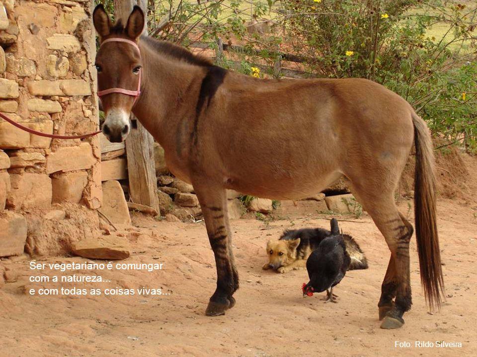 Foto: Rildo Silveira Ser vegetariano é comungar com a natureza... e com todas as coisas vivas...