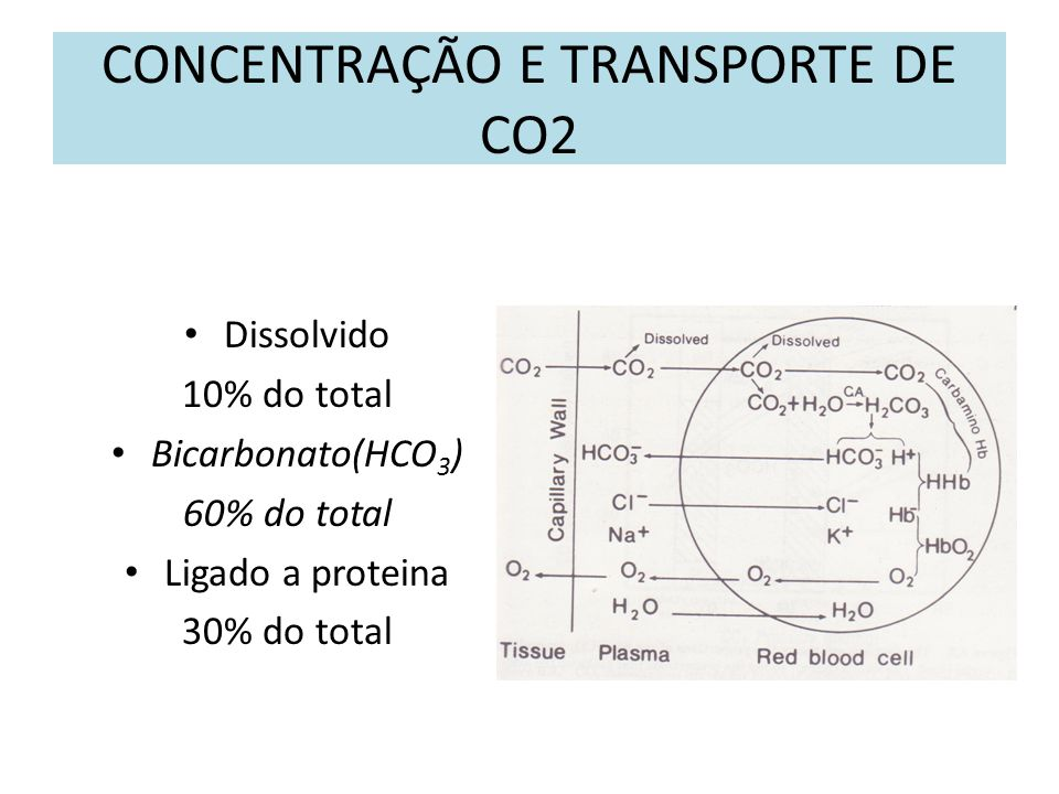 CONCENTRAÇÃO E TRANSPORTE DE CO2 Dissolvido 10% do total Bicarbonato(HCO 3 ) 60% do total Ligado a proteina 30% do total