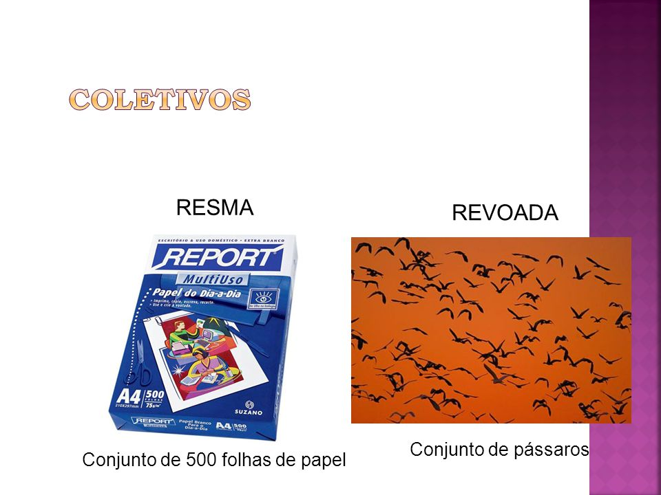 RESMA Conjunto de 500 folhas de papel REVOADA Conjunto de pássaros