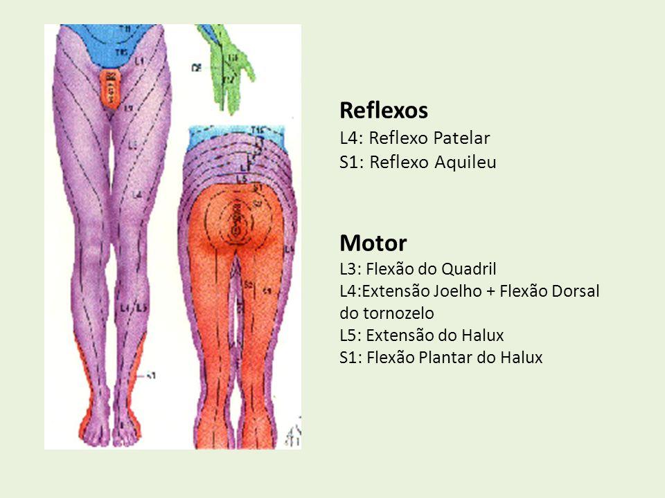 Reflexos L4: Reflexo Patelar S1: Reflexo Aquileu Motor L3: Flexão do Quadril L4:Extensão Joelho + Flexão Dorsal do tornozelo L5: Extensão do Halux S1: