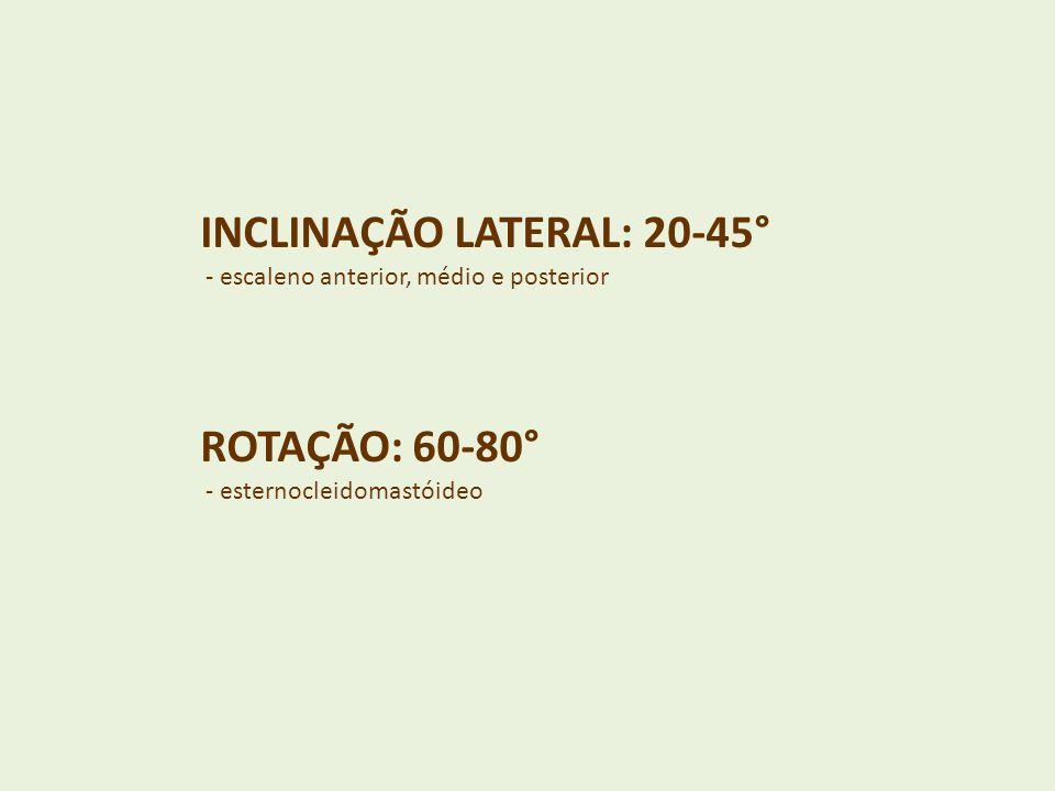 INCLINAÇÃO LATERAL: 20-45° - escaleno anterior, médio e posterior ROTAÇÃO: 60-80° - esternocleidomastóideo