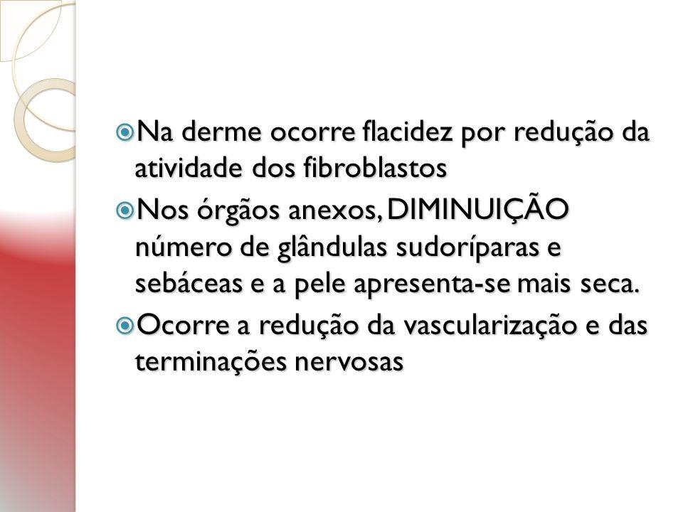 Na derme ocorre flacidez por redução da atividade dos fibroblastos Na derme ocorre flacidez por redução da atividade dos fibroblastos Nos órgãos anexo