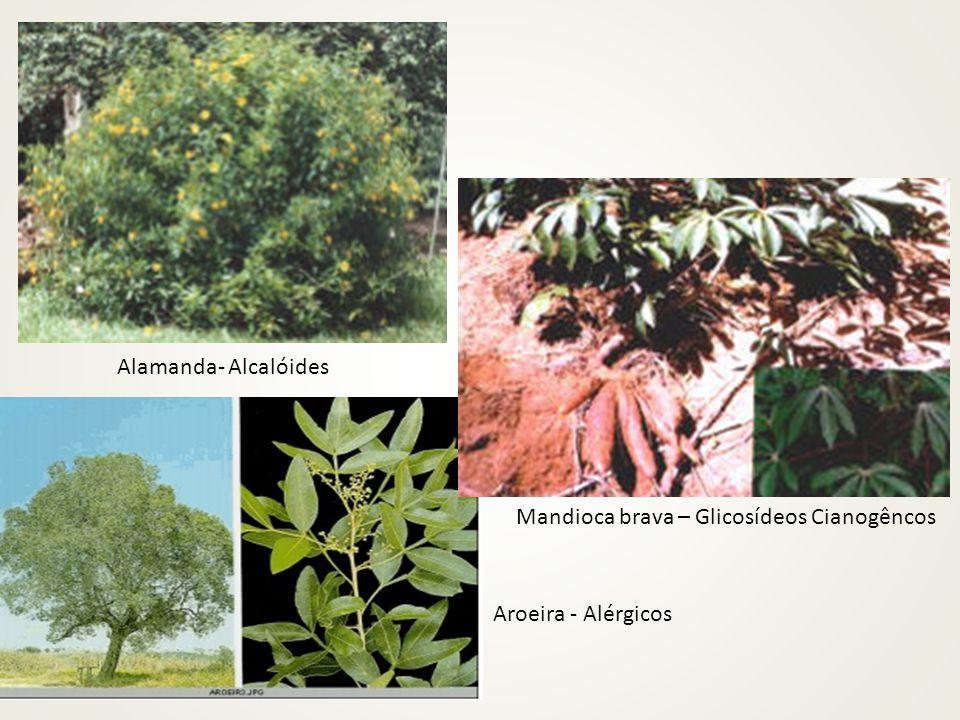 Alamanda- Alcalóides Aroeira - Alérgicos Mandioca brava – Glicosídeos Cianogêncos