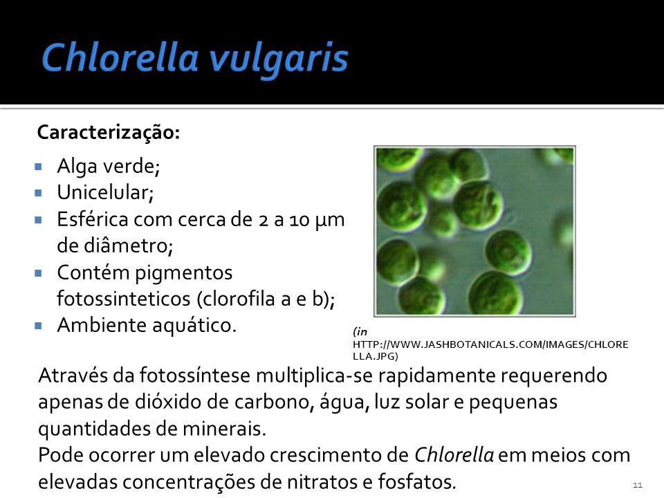 Caracterização: Alga verde; Unicelular; Esférica com cerca de 2 a 10 μm de diâmetro; Contém pigmentos fotossinteticos (clorofila a e b); Ambiente aquá