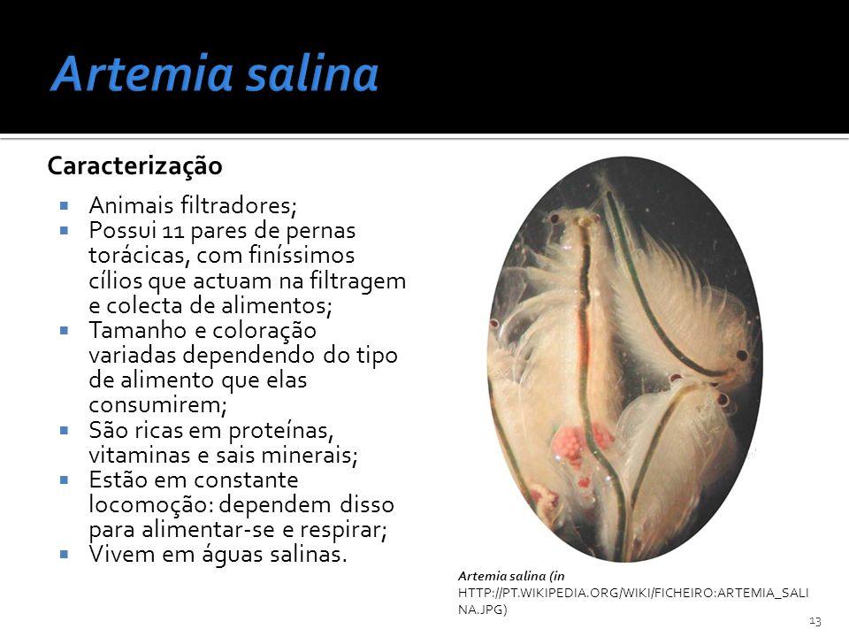 Caracterização Animais filtradores; Possui 11 pares de pernas torácicas, com finíssimos cílios que actuam na filtragem e colecta de alimentos; Tamanho