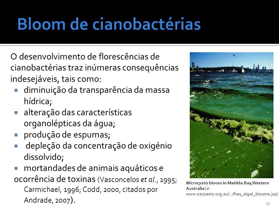 O desenvolvimento de florescências de cianobactérias traz inúmeras consequências indesejáveis, tais como: diminuição da transparência da massa hídrica
