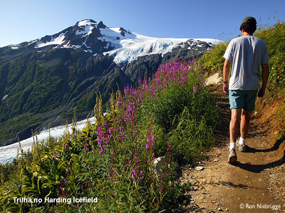 O Parque Nacional de Kenai é o menor dos 8 parques nacionais do Alasca, mas em compensação é um dos mais bonitos e visitados.