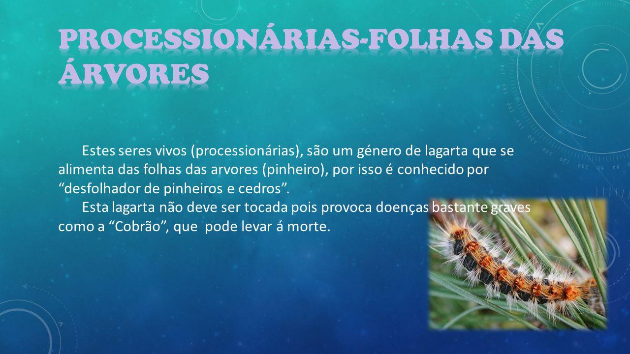 Estes seres vivos (processionárias), são um género de lagarta que se alimenta das folhas das arvores (pinheiro), por isso é conhecido por desfolhador