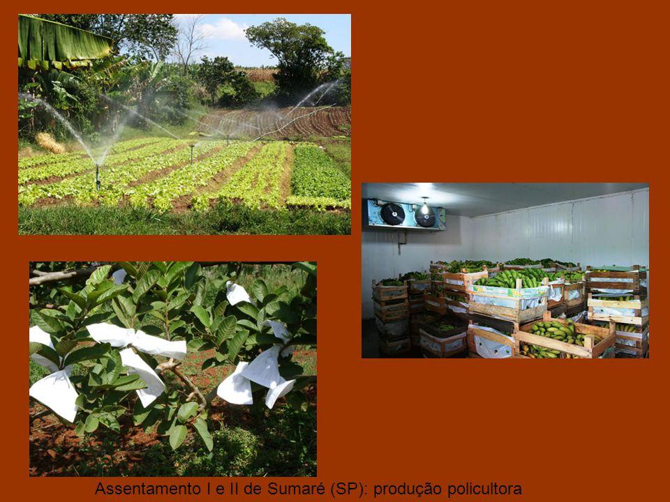 Produto da reforma agrária, em 1984, fundação do Assentamentos 1, 2 e 3 de Sumaré. Capela do Assentamento 1 – Sumaré (SP).