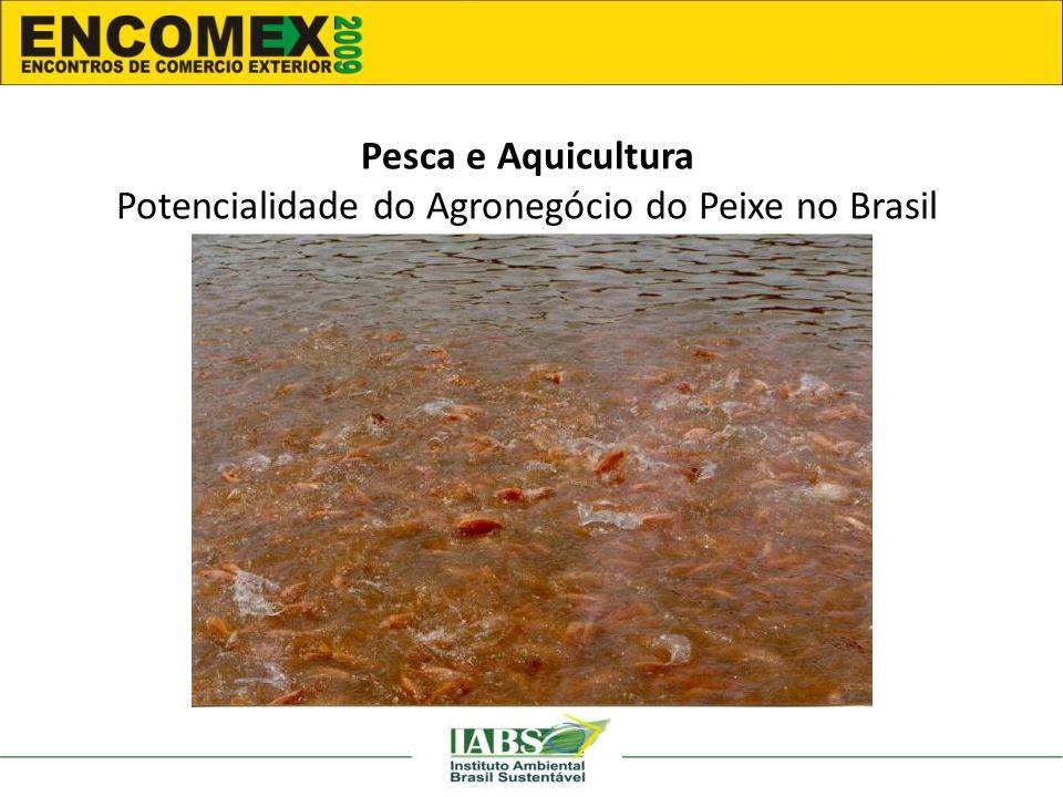 Pesca e Aquicultura Potencialidade do Agronegócio do Peixe no Brasil