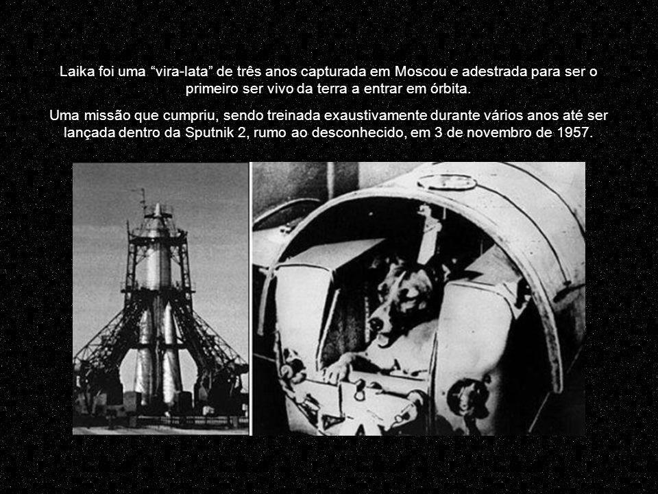 Laika foi uma vira-lata de três anos capturada em Moscou e adestrada para ser o primeiro ser vivo da terra a entrar em órbita.