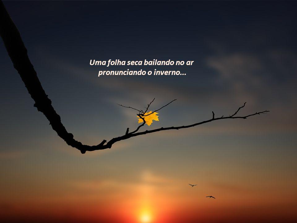 O abrir e fechar das asas das borboletas sobre a flor,a andorinha fazendo acrobacias no ar, a garça solitária à espreita do alimento.