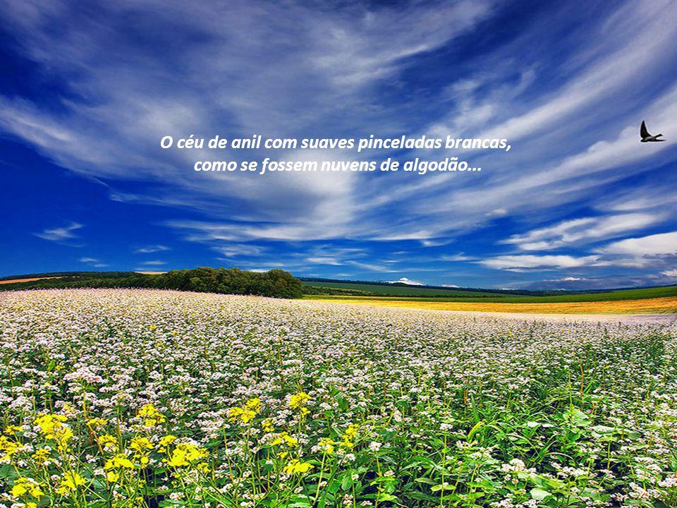 O dia, que em cada amanhecer se renova o convite para que vivamos em harmonia, imitando a natureza.