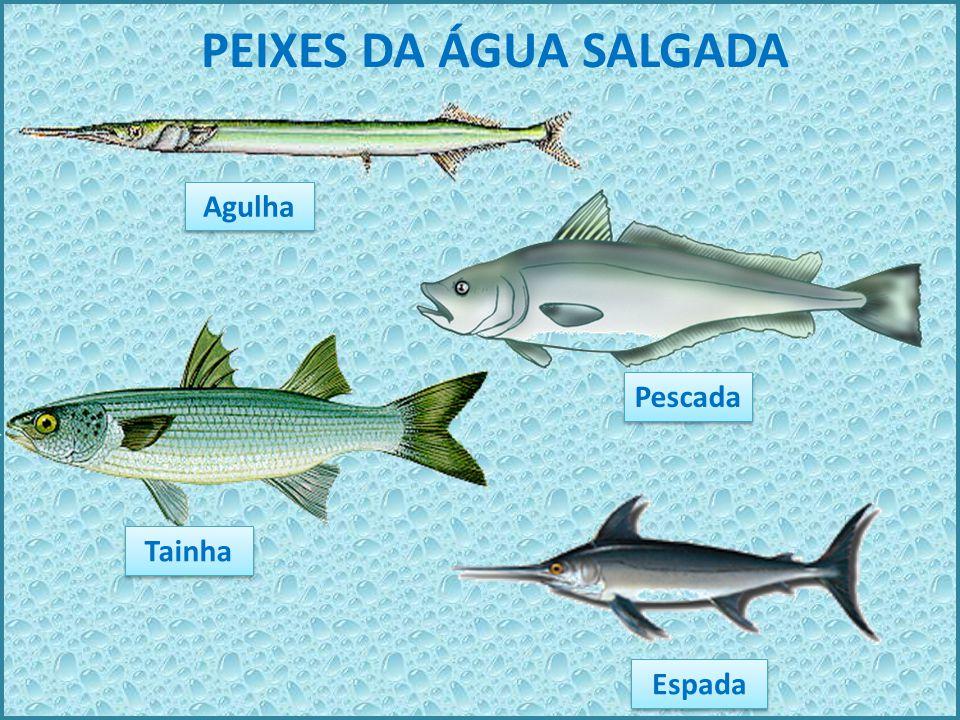 PEIXES DA ÁGUA DOCE Bagre Lambari Pacu Piranha