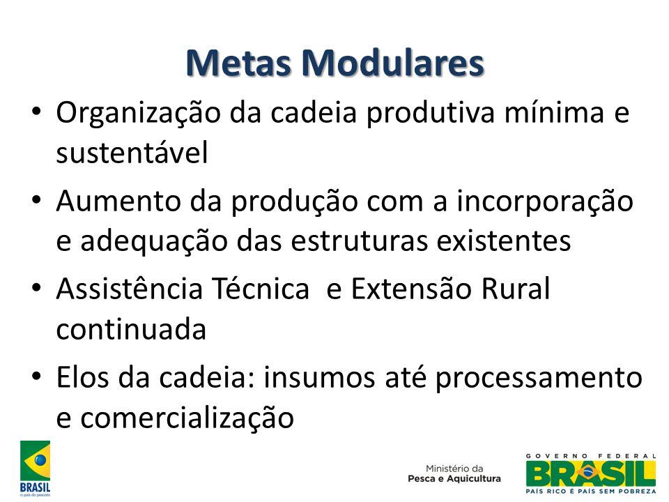 Metas Modulares Organização da cadeia produtiva mínima e sustentável Aumento da produção com a incorporação e adequação das estruturas existentes Assi