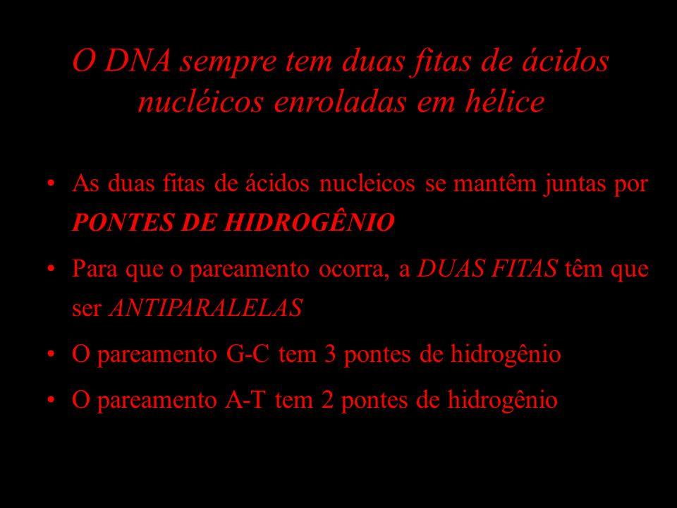 O DNA sempre tem duas fitas de ácidos nucléicos enroladas em hélice As duas fitas de ácidos nucleicos se mantêm juntas por PONTES DE HIDROGÊNIO Para q