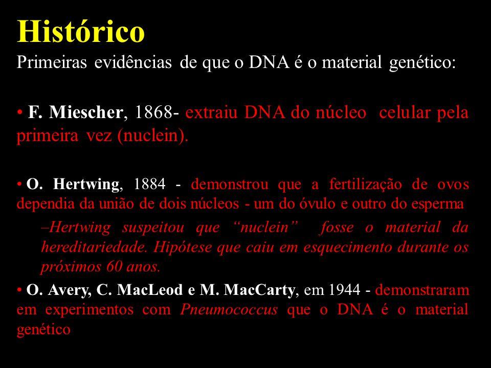 Histórico Primeiras evidências de que o DNA é o material genético: F. Miescher, 1868- extraiu DNA do núcleo celular pela primeira vez (nuclein). O. He