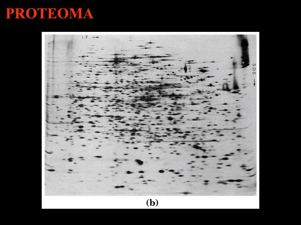 Eletroforese Bidimensional PROTEOMA