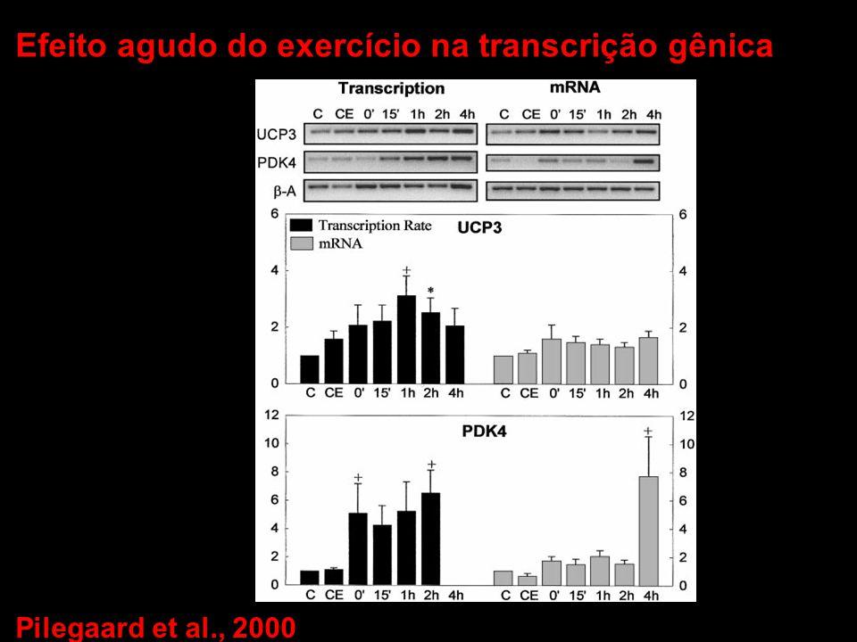 Pilegaard et al., 2000 Efeito agudo do exercício na transcrição gênica