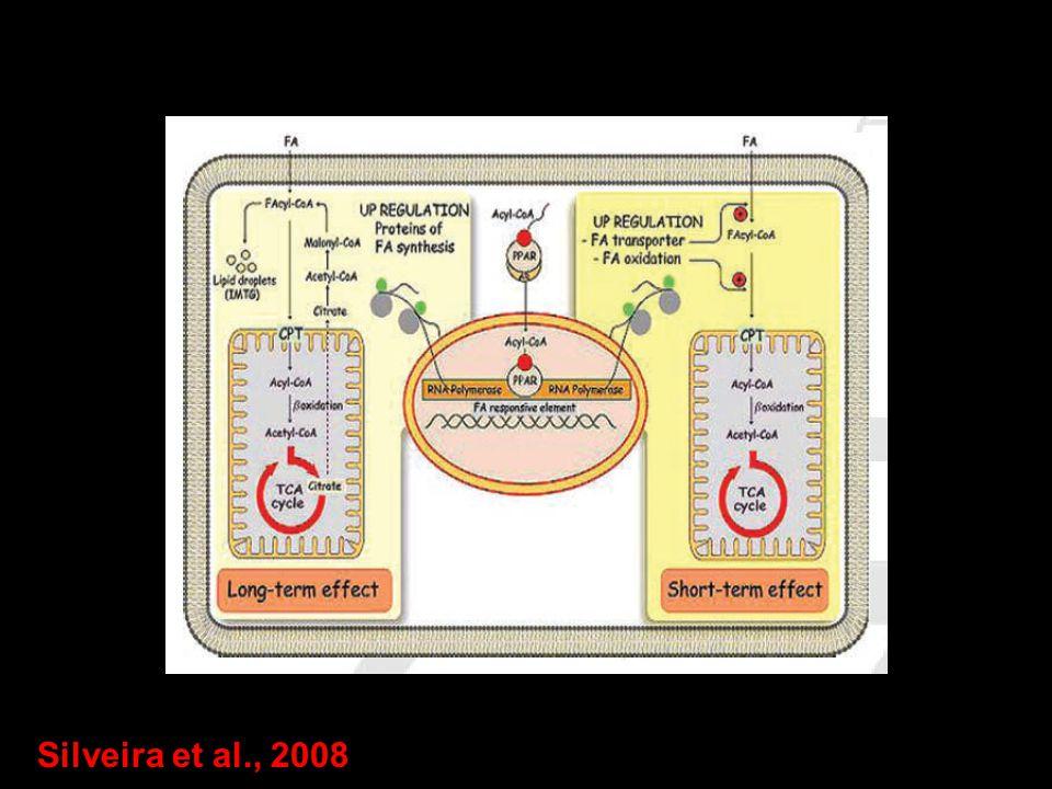 Silveira et al., 2008