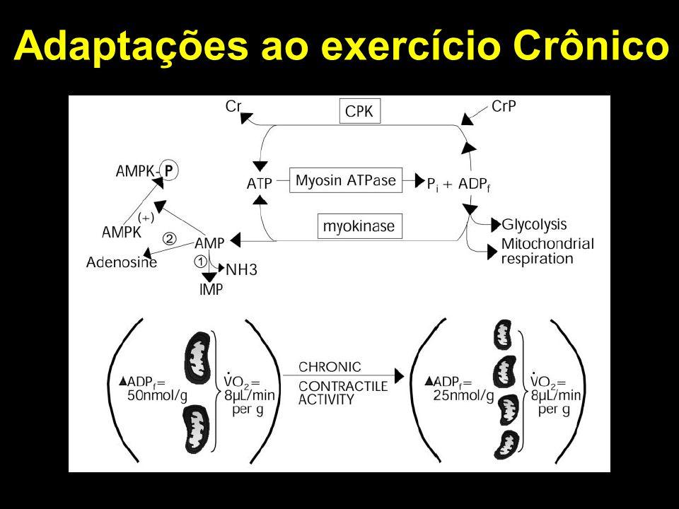 Adaptações ao exercício Crônico