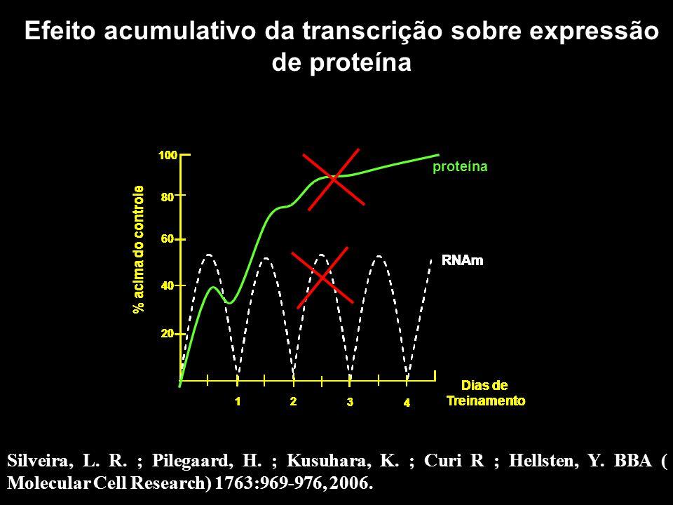 Efeito acumulativo da transcrição sobre expressão de proteína 60 80 100 1 2 3 4 20 40 Dias de Treinamento % acima do controle RNAm 60 80 100 1 2 3 4 2