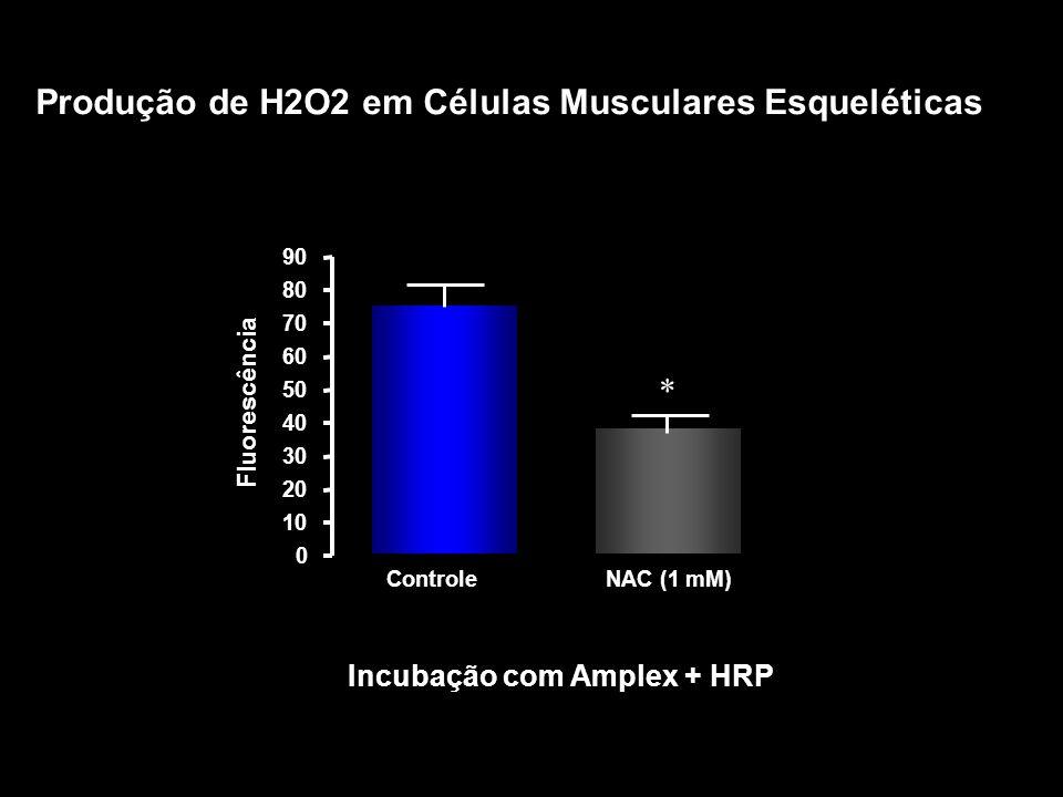 Produção de H2O2 em Células Musculares Esqueléticas ControleNAC (1 mM) 0 10 20 30 40 50 60 70 80 90 *** Incubação com Amplex + HRP Fluorescência *