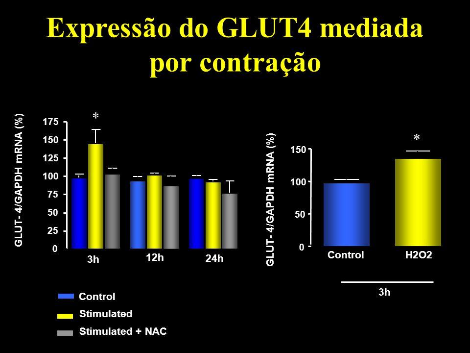 Expressão do GLUT4 mediada por contração Control Stimulated NAC Stimulated + NAC Controle 12 horas Controle 0 25 50 75 100 125 150 175 3h 12h 24h p <0