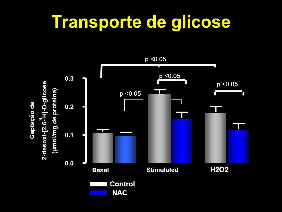 Transporte de glicose 0.0 0.1 0.2 0.3 Basal Stimulated 2 O 2 p <0.05 Control NAC Captação de 2-desoxi-[2.6- 3 H]-D-glicose (µmol/mg de proteína) H2O2