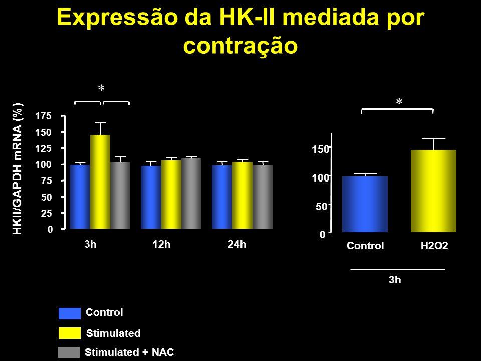 Expressão da HK-II mediada por contração NAC 0 50 100 150 Control Stimulated NAC HKII/GAPDH mRNA (%) 0 25 50 75 100 125 150 175 Sem tratamento e 3h12h