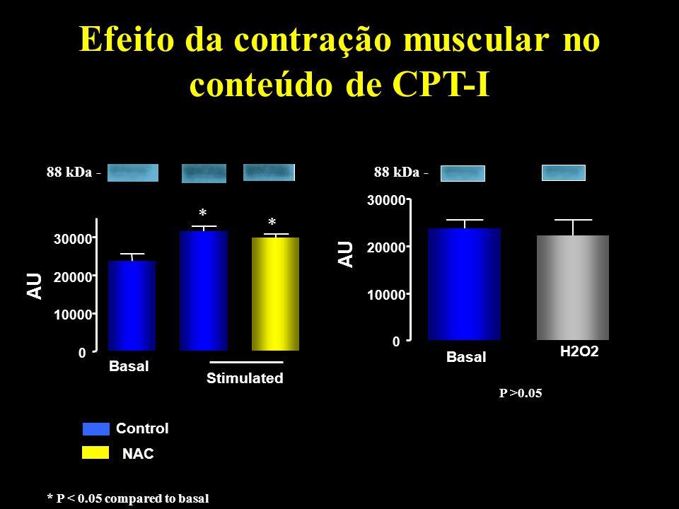 Efeito da contração muscular no conteúdo de CPT-I NAC Control 0 10000 20000 30000 AU * 88 kDa - Basal Stimulated * * P < 0.05 compared to basal 0 1000