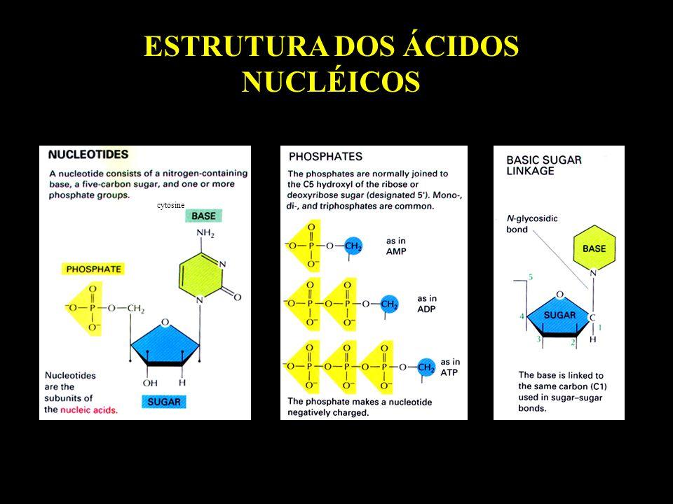 Atividade da PFK Phosphofructokinase (nmol/min/mg) Control NAC 0.00 0.05 0.10 0.15 0.20 0.25 BasalStimulatedH2O2 * * * *