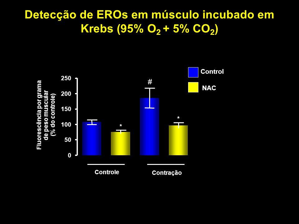 Detecção de EROs em músculo incubado em Krebs (95% O 2 + 5% CO 2 ) Controle Contração 0 50 100 150 200 250 * # * Fluorescência por grama de peso muscu
