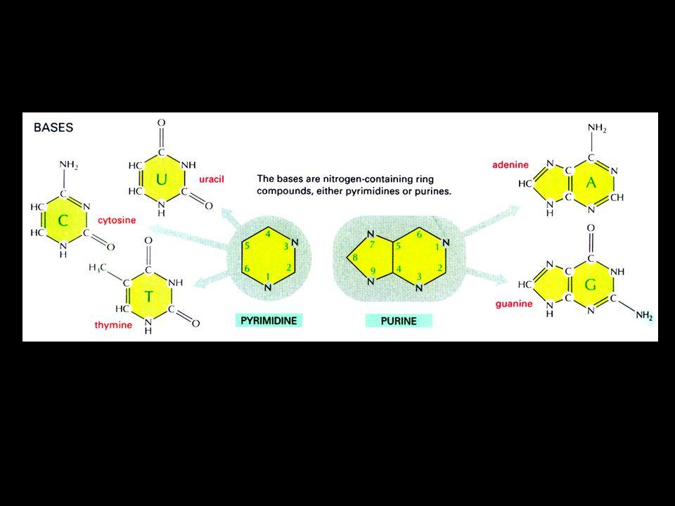 FFA Fatty acyl-CoA CPTI CPTII translocase acyl-CoA -oxidation FATp GT Glucose-6P Fructose-6P Fructose-1,6-bi-P PFK Glucose Pyruvate cytosol M.