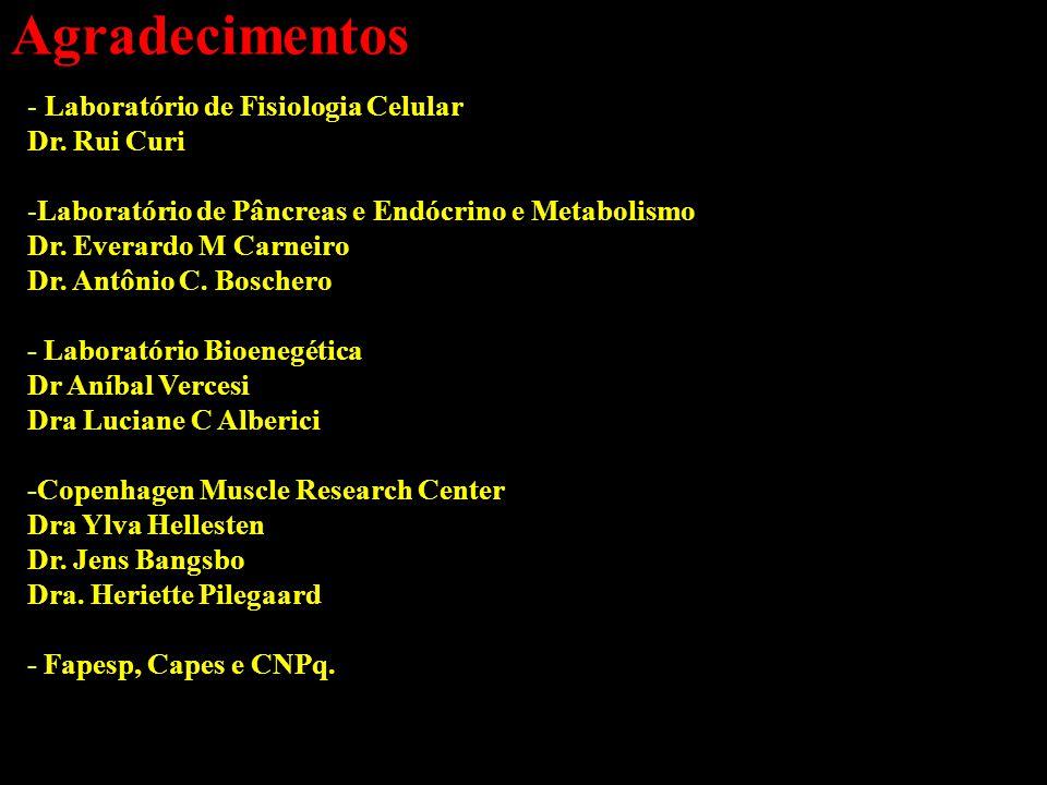 Agradecimentos - Laboratório de Fisiologia Celular Dr. Rui Curi -Laboratório de Pâncreas e Endócrino e Metabolismo Dr. Everardo M Carneiro Dr. Antônio