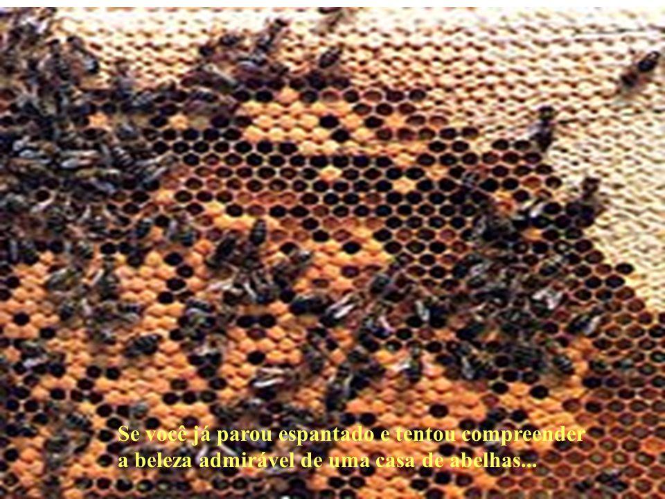 Se você já parou espantado e tentou compreender a beleza admirável de uma casa de abelhas...