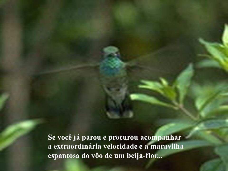 Se você já parou e procurou acompanhar a extraordinária velocidade e a maravilha espantosa do vôo de um beija-flor...