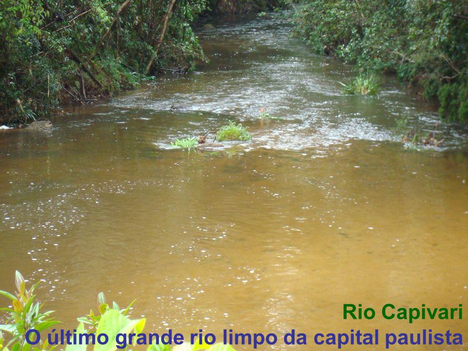 Nascente do Rio Embu-Guaçu, no Parque Estadual da Serra do Mar.