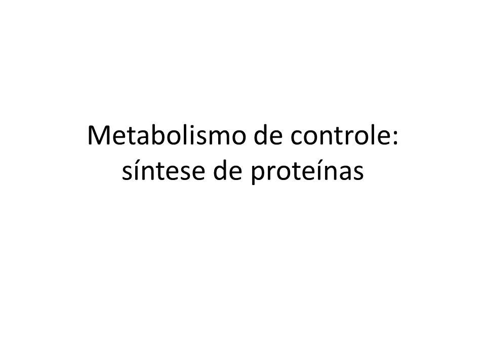 Metabolismo de controle: síntese de proteínas