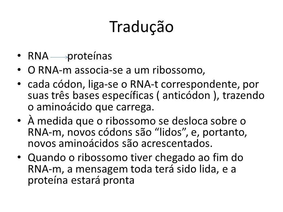 Tradução RNA proteínas O RNA-m associa-se a um ribossomo, cada códon, liga-se o RNA-t correspondente, por suas três bases específicas ( anticódon ), t