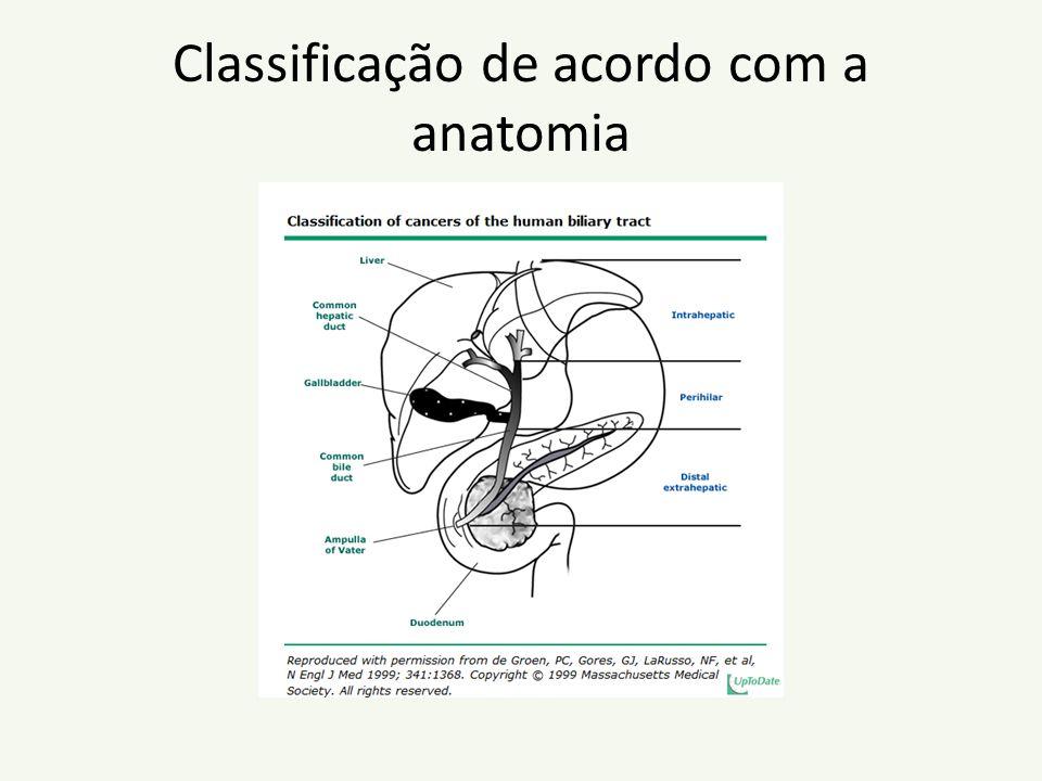 Classificação de acordo com a anatomia