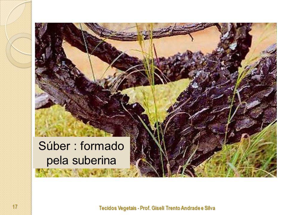 Tecidos Vegetais - Prof. Giseli Trento Andrade e Silva 17 Súber : formado pela suberina