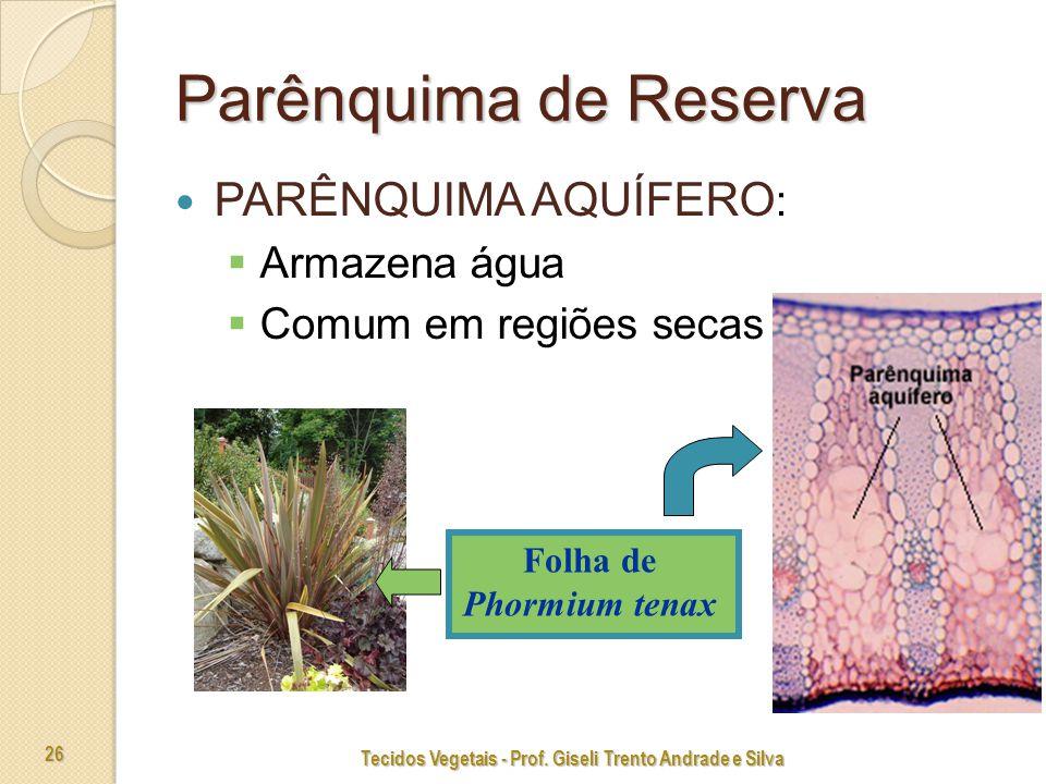 Tecidos Vegetais - Prof.