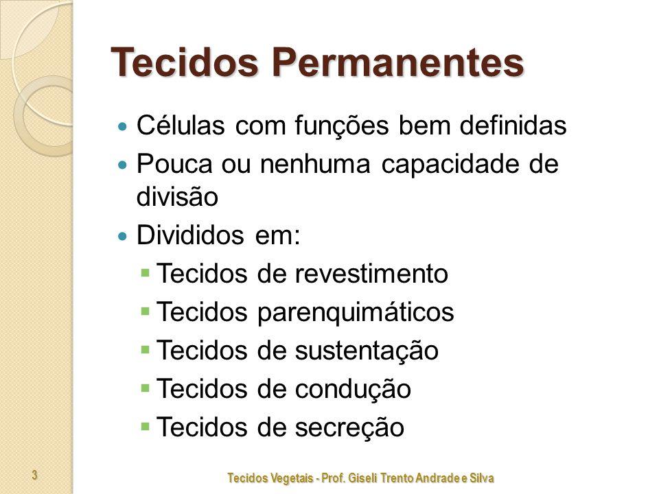 Tecidos Vegetais - Prof. Giseli Trento Andrade e Silva 14