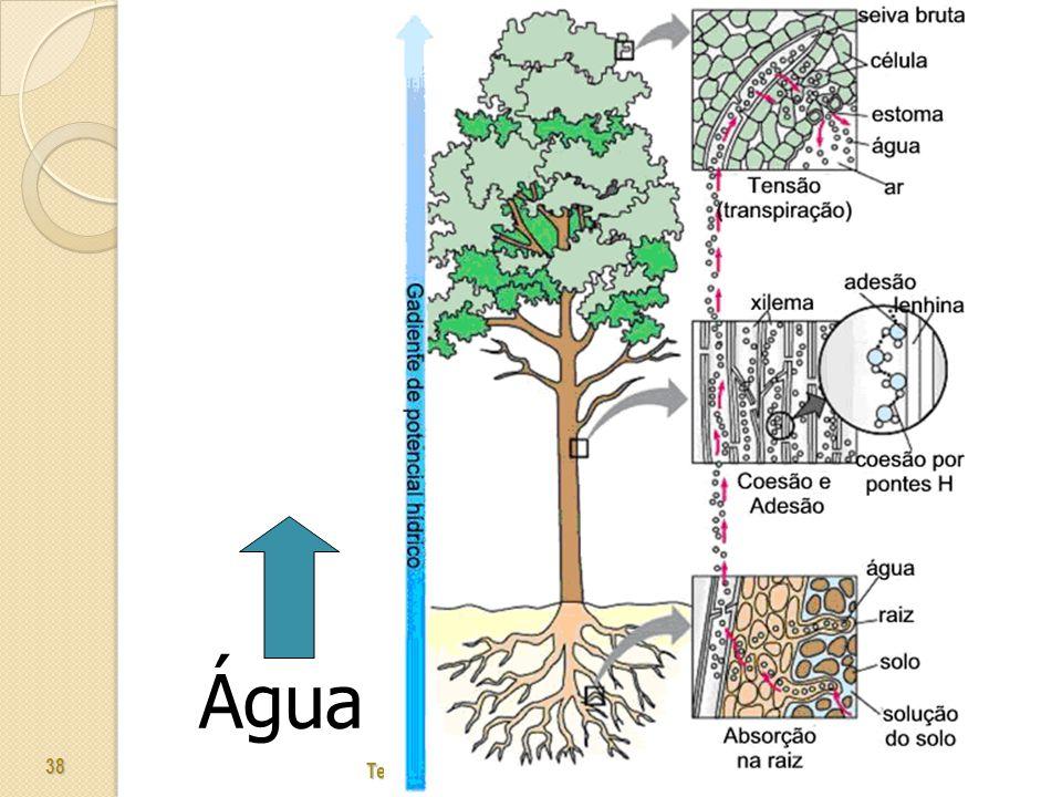 Tecidos Vegetais - Prof. Giseli Trento Andrade e Silva 38 Água