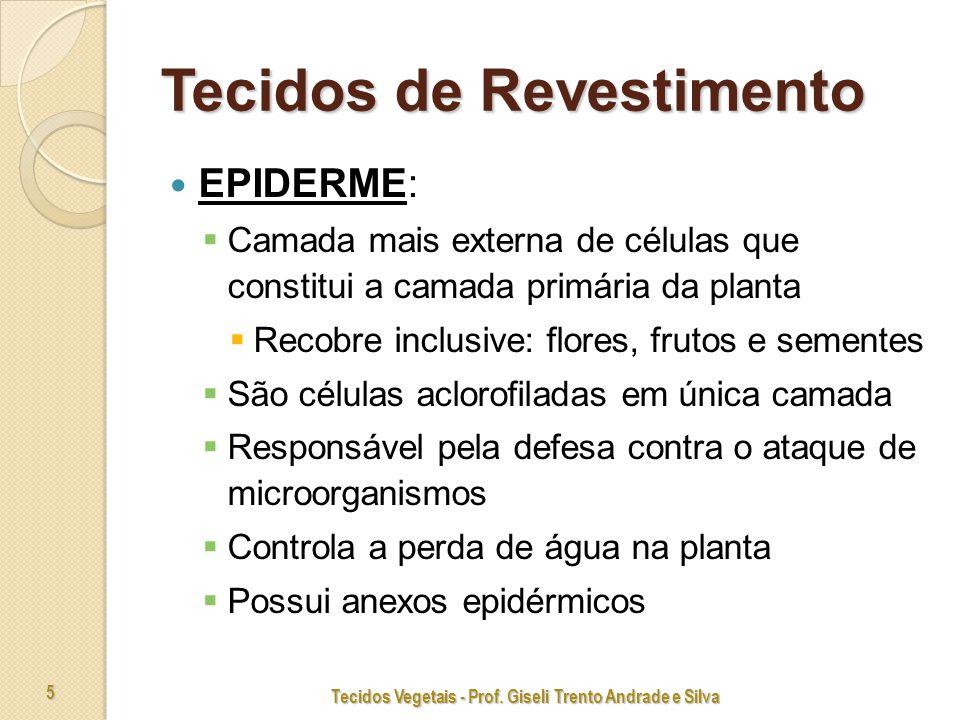 Tecidos Vegetais - Prof. Giseli Trento Andrade e Silva 6 Epiderme